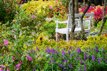 White Chair In Flower Garden