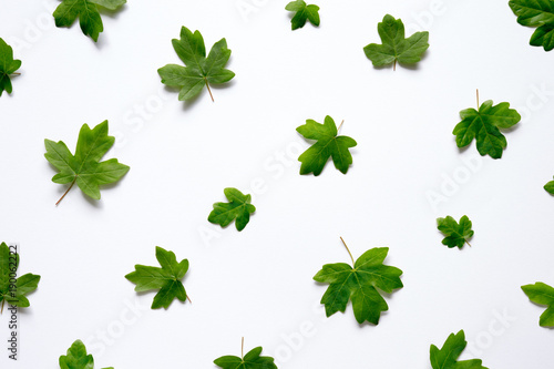 Photo  View From Above On Green Maple Leaves