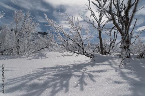 Aluminium Prints Dark grey swedish Lapland in winter by night with full moon - Sweden