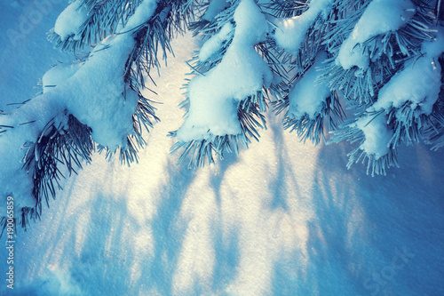Deurstickers Kristallen Pine branches covered with snow. Natural winter background. Winter nature. Snowy forest. Christmas background