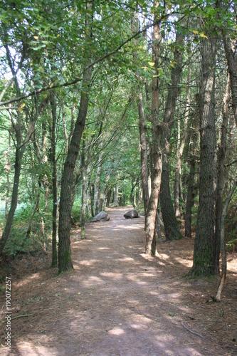 Tuinposter Weg in bos Fontainte de Barenton Broceliande Bretagne