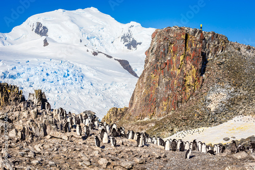 Large flock of chinstrap penguins standing on the rocks with snow mountain in the background, Half Moon island, Antarctic peninsula