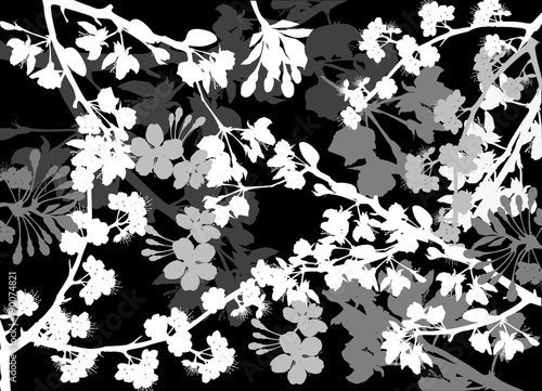 white spring background from blossoming cherry tree branches © Alexander Potapov