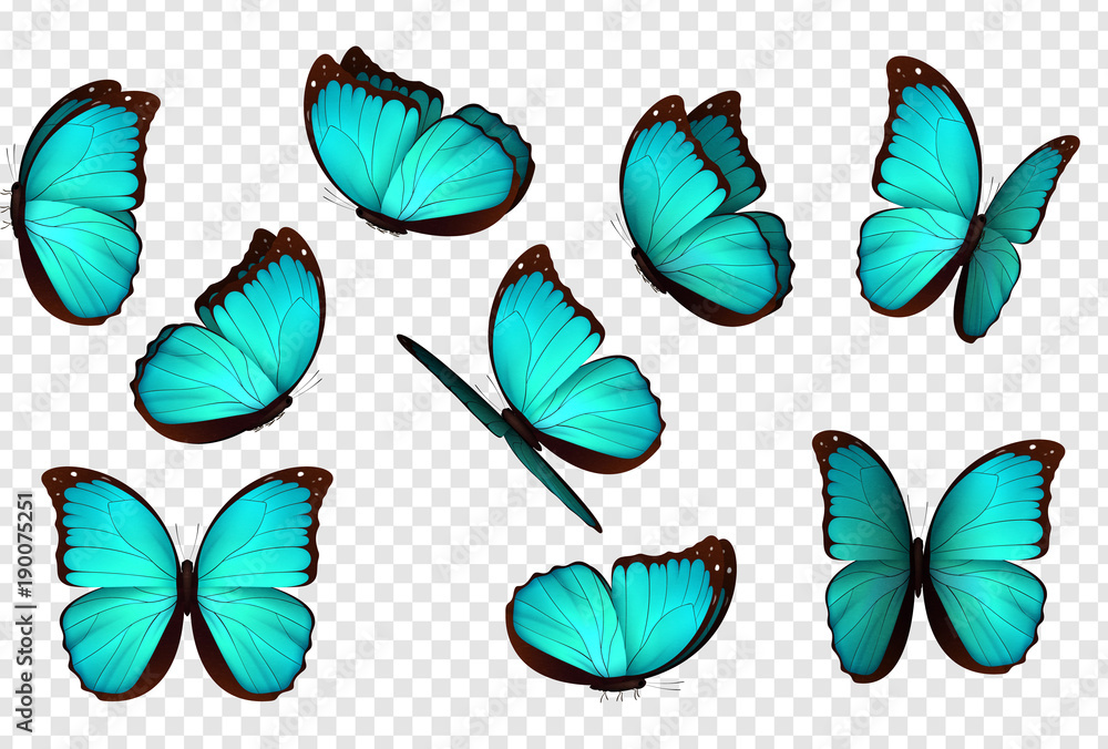 Fototapeta Butterfly blue vector illustration. Set blue isolated butterflies. Insects Lepidoptera Morpho amathonte.