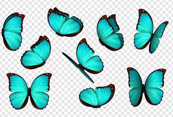Leptir plava vektorska ilustracija. Postavite plave izolirane leptire. Insekti Lepidoptera Morpho amathonte.