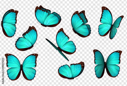 Butterfly blue vector illustration. Set blue isolated butterflies. Insects Lepidoptera Morpho amathonte. - 190075251