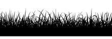 Black Grass Silhouette, Seamless Illustration. Meadow Border