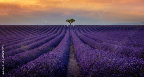 Photo Stands Lavender Valensole - Champs de lavande
