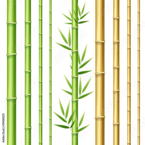 Fotografiet  Realistic 3d Detailed Bamboo Shoots Set. Vector