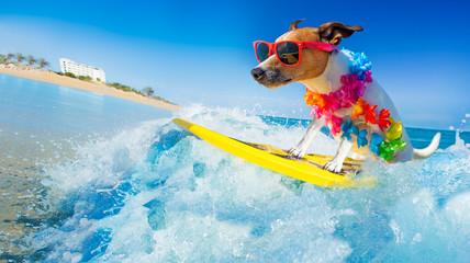 Fototapetadog surfing on a wave