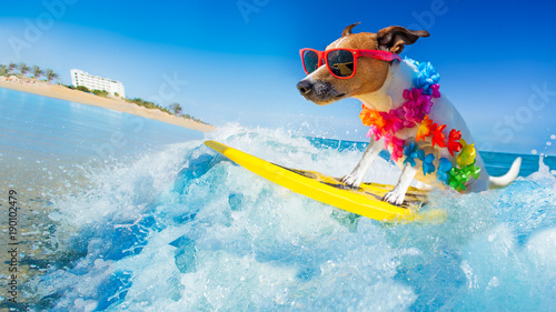 Tuinposter Crazy dog dog surfing on a wave