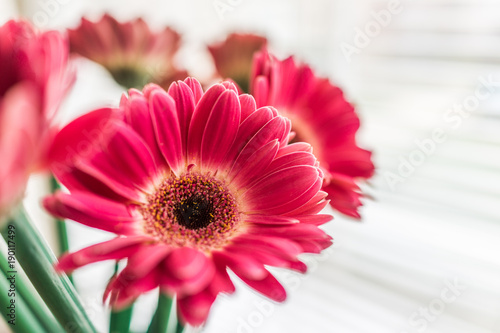 Closeup of pink gerbera flower bouquet in vase