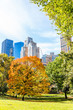 Manhattan New York City NYC Central park with one orange trees, nobody, cityscape buildings skyline in autumn fall season with yellow vibrant saturated foliage