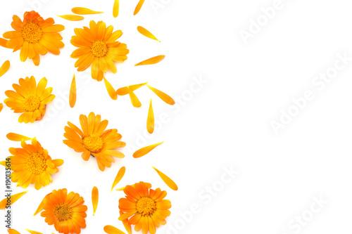 Obraz marigold flowers isolated on white background ( calendula flower ) top view - fototapety do salonu