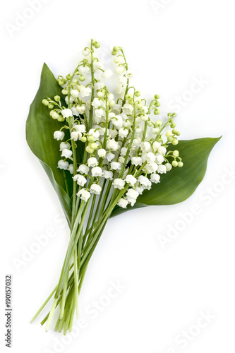 Foto op Aluminium Lelietje van dalen Lily of the Valley Isolated on White