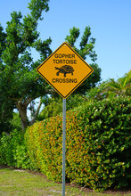 Yellow Gopher Tortoise Crossing Sign In Florida
