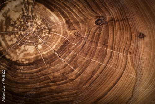 Fotografía  Stump of oak tree felled - section of the trunk with annual rings
