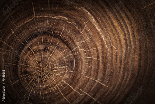 Carta da parati  Stump of oak tree felled - section of the trunk with annual rings