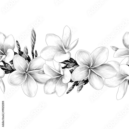 Seamless Strip Of Magnolia Flower Sketch Vector Graphics Monochrome