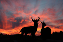Buck And Doe Whitetail Deer Si...