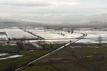 Type Of Flooded Fields, Agricu...