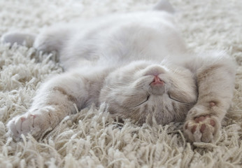 Cute cat lying on the back like on a carpet
