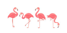 Flamingo Bird Illustration Des...