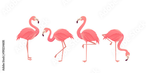 Obraz na plátně Flamingo bird illustration design on background