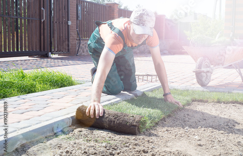 Poster Blanc Landscape Gardener Laying Turf For New Lawn