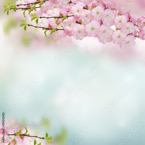 Aluminium Prints Blue sky Blossoming pink tree Flowers