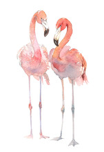 Two Flamingo Isolated On White Background. Watercolor Hand Drawn Illustration. Rastra.
