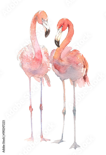 Two flamingo isolated on white background Fototapet