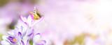 Fototapeta Natura - Wiese mit zarten Blumen im Frühling