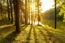 Sunrise In Early Morning At Pang Ung Lake Park With Silhouette Pine Trees And Shadow At Pai Mae Hong Son,Thailand