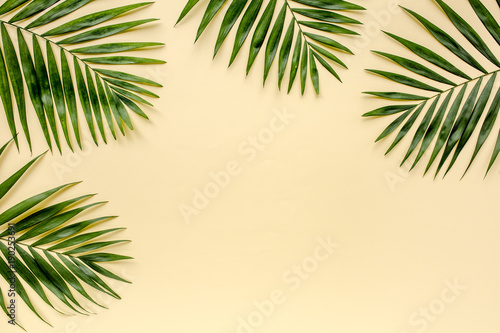Canvas Prints Palm tree Tropical green palm leaf branches isolated on yellow background. the apartment lay, top view