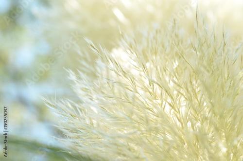 Fotografie, Obraz plante douceur
