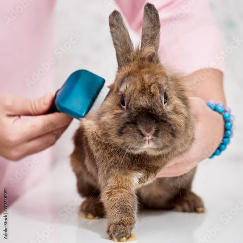 Fotografía  Rabbit in grooming salon