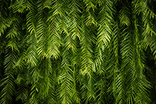 Green Leaf Wall Background And...
