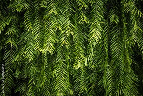 zielony-lisc-sciany-tlo-i-tekstura