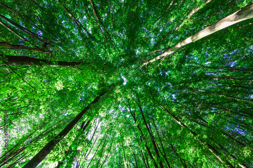 Foto auf Leinwand Grun forest trees nature green wood