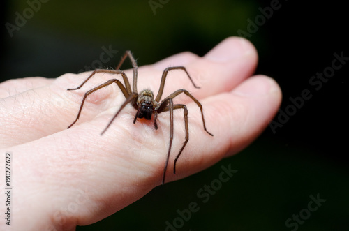 Photo Big scary spider on hand