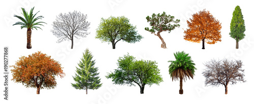 Fotomural Set of green trees isolated on white background