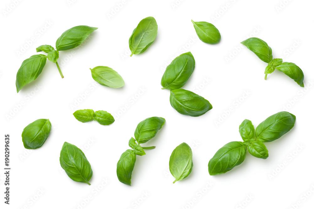 Fototapety, obrazy: Basil Leaves Isolated on White Background