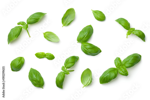 Poster Aromatische Basil Leaves Isolated on White Background