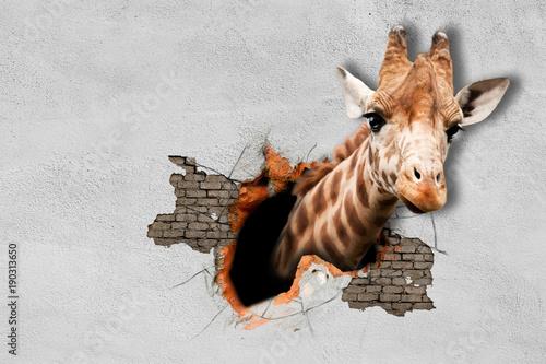 giraffe-wyrywa-glowe-ze-sciany-malowidla-scienne-rend