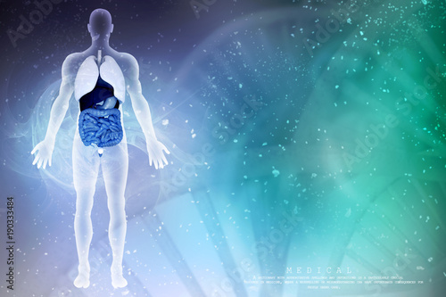 Fotografie, Obraz  Healthy Human Lungs 3d illustration with human body