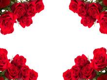 Red Roses As Frame On White Ba...