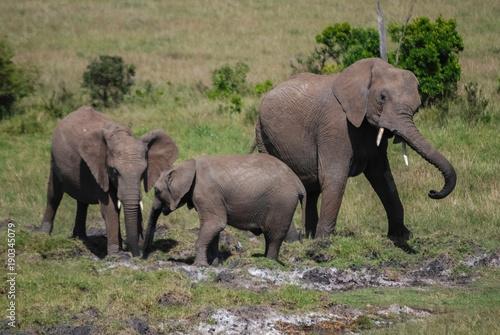 Foto op Aluminium Olifant Elephant in National park of Kenya, Africa