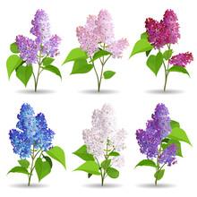 Spring Flowers. Set Of Lilac I...