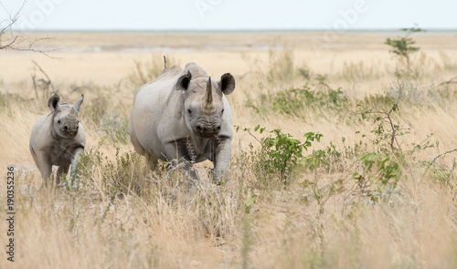 Rhino and her calf in the bush